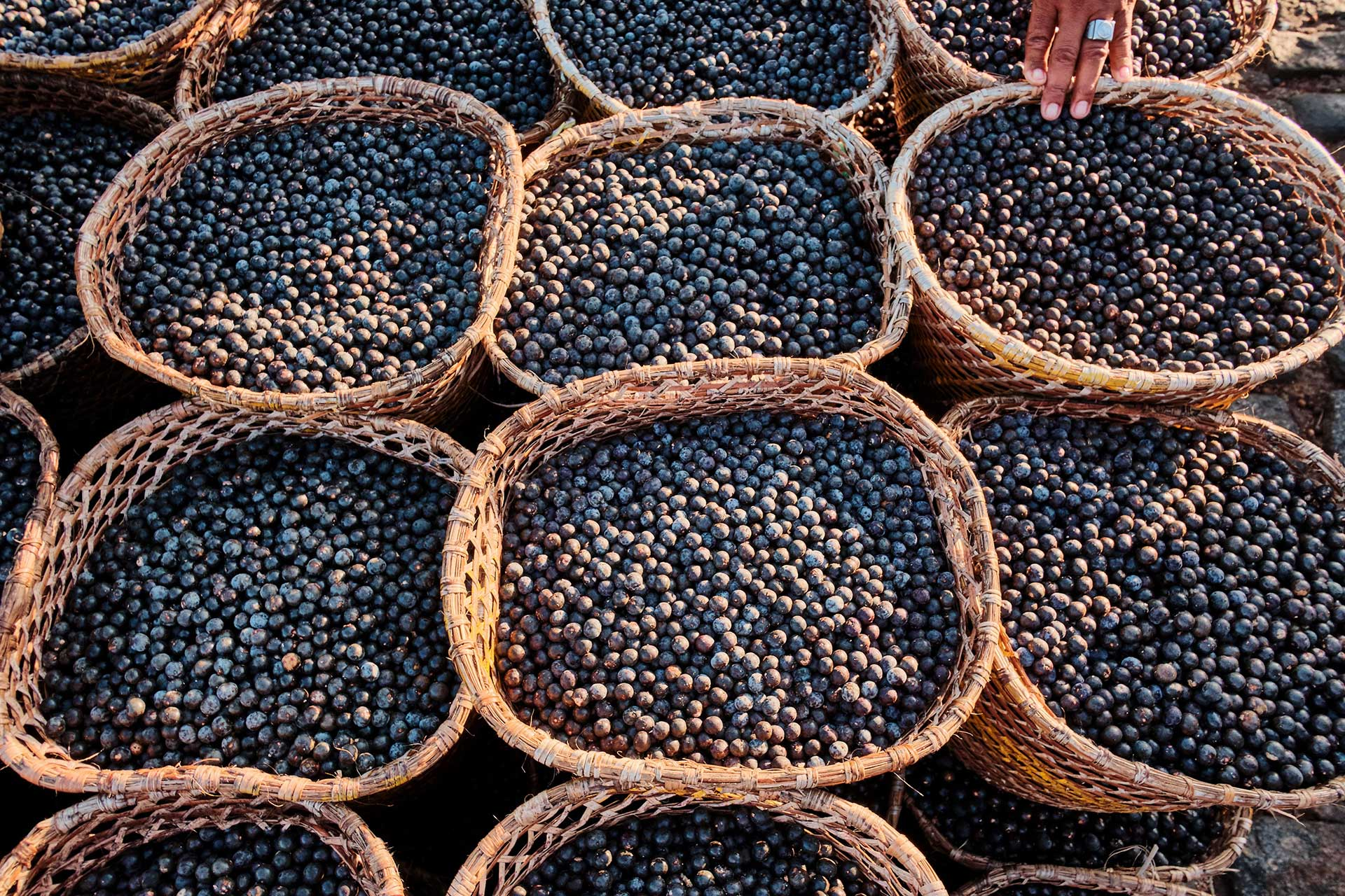 Does acai berry work to lose weight – what does acai berry do